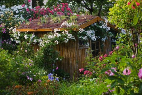 17 May 2011, France --- Andre Eve Garden, France, Shed with Living Roof Of Sedums --- Image by © Clive Nichols/Clive Nichols/Corbis